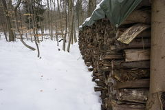 Vedträ i winterly skog arkivfoton