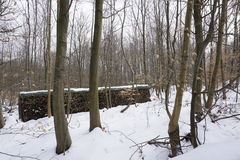 Vedträ i winterly skog royaltyfri foto
