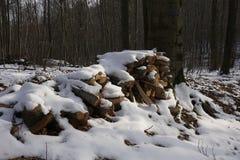 Vedträ i winterly skog royaltyfri bild