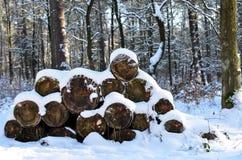 Vedträ med snow arkivbilder