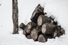 Vedträ som täckas i snö royaltyfria foton