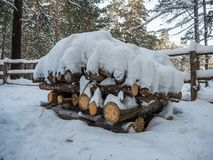 Vedtrave som staplas av vedträt under snön, Novosibirsk, Ryssland arkivfoton