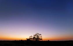 Veduta d'insieme dell'albero della vita, Bahrain, HDR Immagini Stock