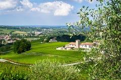 Vitigno e olive Forli royalty free stock image