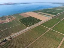 Veduta panoramica dei frutteti dell'uva File della vite Vista superiore sul giardino su un fondo dell'estuario, del villaggio e d fotografia stock