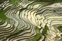 Veduta panoramica dei terrazzi del riso in sapa Distri di stagione delle pioggie Fotografia Stock Libera da Diritti