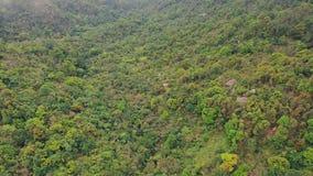 Veduta panoramica della foresta