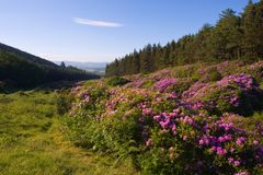 The Vee. Popular beauty spot in the Comeragh Mountains, Co.Waterford, Ireland Stock Images