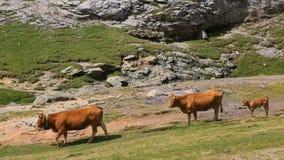 Vee in de Pyrenee?n stock footage