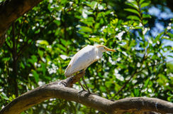 Veeaigrette Stock Foto