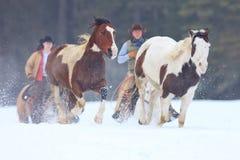 Veedrijfster en Cowboy bewegende paarden terug naar boerderij Stock Foto's