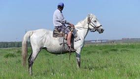 Veehoederzitting op een paard op het gebied stock video