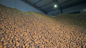 Veel aardappels in een pakhuis, sluiten omhoog stock videobeelden