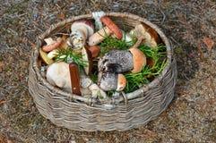 Veel bospaddestoelen zoals eekhoorntjesbroden, rood-caped scaber ruw-gestamde steel, of berk bolete in de rieten mand stock foto's