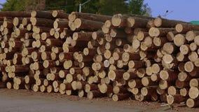 Veel brandhout in voorraad, uiteindeeinden van gezaagde bomen in de zaagmolen stock videobeelden