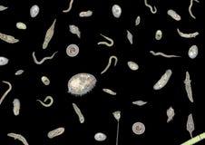 Veel diverse micro-organismen Stock Foto's