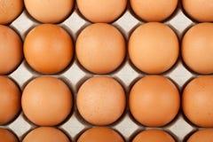Veel eieren Royalty-vrije Stock Fotografie