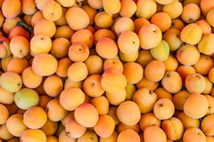 Veel gele perziken stock foto