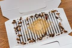Veel kakkerlakken zijn catched door de sticker of de vanger geweest stock foto