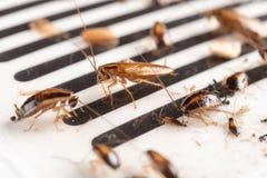 Veel kakkerlakken zijn gevangen door de sticker stock foto's