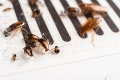 Veel kakkerlakken zijn gevangen door de sticker royalty-vrije stock afbeelding