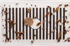 Veel kakkerlakken zijn gevangen door de sticker of de vanger stock afbeelding
