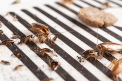 Veel kakkerlakken zijn gevangen door de sticker of de vanger royalty-vrije stock foto's