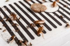 Veel kakkerlakken zijn gevangen door de sticker of de vanger royalty-vrije stock afbeelding