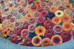 Veel oranje bloemen Stock Afbeeldingen