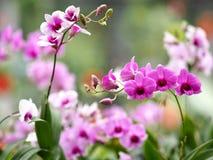 Veel orchideeën, roze en purper boeket stock fotografie
