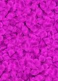 Veel rode bloemblaadjes die op een vloer leggen Stock Fotografie
