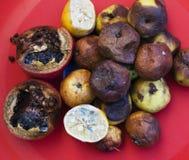Veel roten vruchten De appelen, citroen, molden donker en gedroogde granaat op Het concept van de milieuomzetting Stock Fotografie