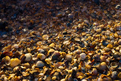 Veel shells Stock Foto