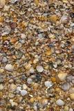 Veel shells Stock Foto's