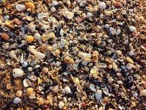 Veel shells Stock Fotografie
