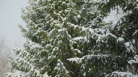 Veel Sneeuw op de Bomen stock videobeelden