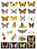 Veel vlinders Stock Afbeeldingen