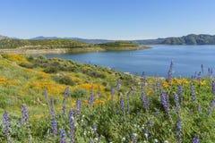 Veel wilde bloembloesem in Diamond Valley Lake Royalty-vrije Stock Afbeeldingen