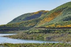 Veel wilde bloembloesem in Diamond Valley Lake Royalty-vrije Stock Foto