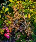 Veelkleurig Forest Vegetation Stock Fotografie