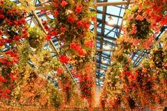 Veelkleurige Begonia in Begoniatuin, Nabana geen Sato, Mie, Japan Royalty-vrije Stock Foto