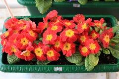 Veelkleurige bloem Stock Foto's