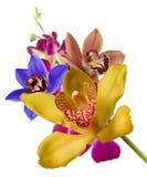 Veelkleurige orchideeën royalty-vrije stock afbeeldingen