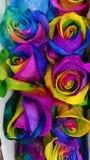 Veelkleurige rozen stock foto's