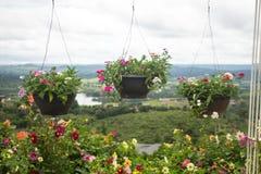 Veelvoud dat bastets met bloemen buiten huisvensters hangt Stock Fotografie