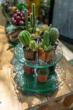 Veelvoudig gecombineerd cactusdecor samen op de dessertschotel op het buffet van de fruitlijn bij de tuin in Thailand royalty-vrije stock fotografie