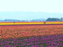 Veelvoudige de kleurentulp van de bloemtuin royalty-vrije stock fotografie