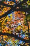 Veelvoudige kleuren van bladeren tijdens de herfst royalty-vrije stock afbeeldingen