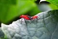 Veelvoudige van de insectenliefde en affectie bovenkant van de installatie van de damesvinger royalty-vrije stock afbeeldingen