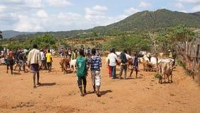 Veemarkt, Zeer belangrijke Afer, Ethiopië, Afrika stock foto's